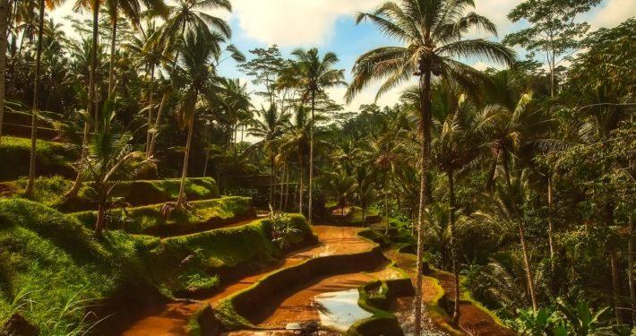 Buche deinen Trip rund um Bali bei uns im Camp